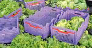 Ernte- und Transportbehälter von Gamma-Wopla