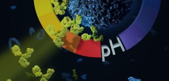 Grafik Nanocarrier und Antikörper bei sauren Bedingungen