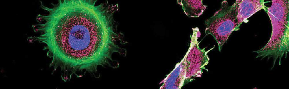 LABO Special: Analytik in der Zellbiologie