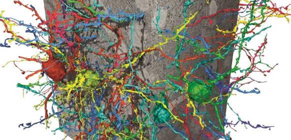 Rekonstruktion von Nervenzellen aus einem Elektronenmikroskopie-Datensatz