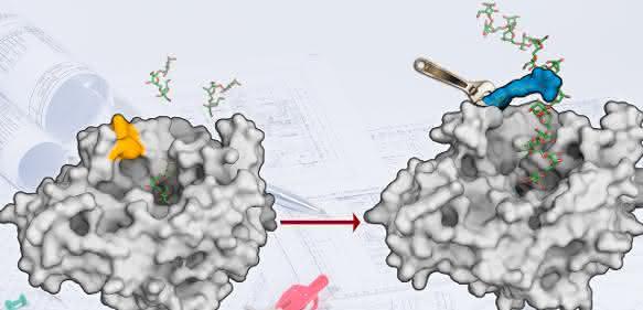 Oberfläche des Enzyms Levansucrase