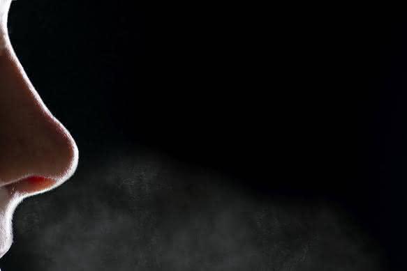 Die menschliche Nase