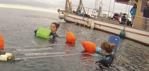 Probennahme im Meer