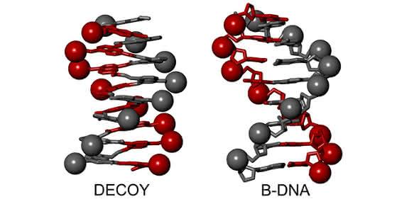 Modell einer B-DNA-Doppelhelix und mit einem Foldamer, das einen einzelnen Helixstrang nachahmt.