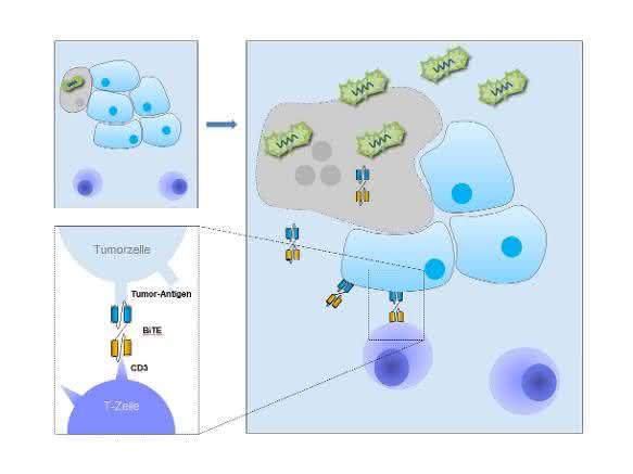 Onkologie: Immuntherapie direkt aus der Krebszelle