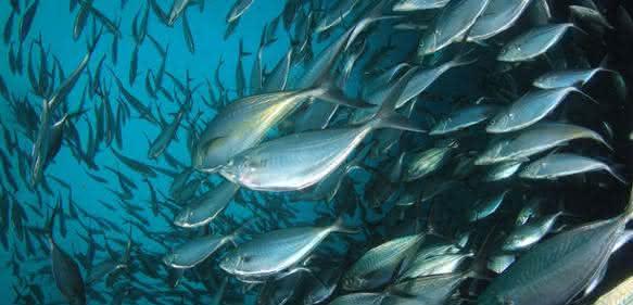 Fischartenbestimmung mit MALDI-TOF-MS: Schnelle, zuverlässige Identifikation über artspezifische Proteinmuster