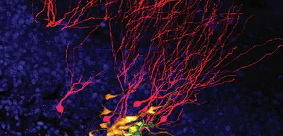 Mikroskopische Aufnahme von Stammzellen über die Zeit