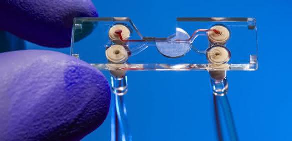 Sortier-Chip zur Analyse und Isolation von Zellen in einer Blutprobe