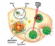 Tumorbehandlung: Plattform für Transport von Gentherapeutika