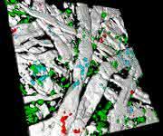 Raman-Imaging: Mit aktiver Fokus-Stabilisierung