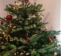 oh tannenbaum tipps vom botaniker so bleibt der weihnachtsbaum lange frisch labo online. Black Bedroom Furniture Sets. Home Design Ideas