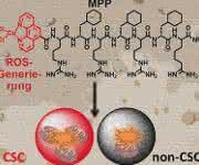 Schematische Darstellung der Wirkweise des Metallopeptids im Mitochondrium
