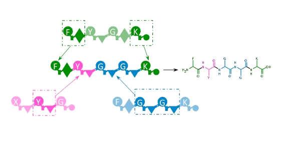 Peptid-Wirkstoffe aus dem Baukasten: Mit Enzym-Design ans Ziel