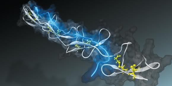 Mechanobiologie: Nano-Sensor misst Faserspannung