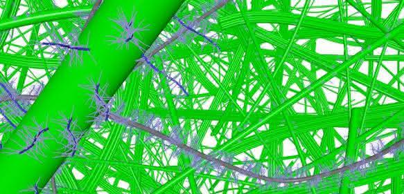 Grafik: Wechselwirkung von Kollagenfasern, Proteoglykanen und Wasser