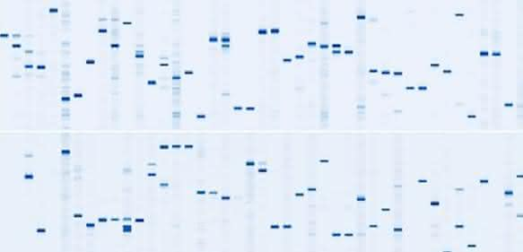 "DigiWest-abgeleitete Western-Blot-""Mimics"""