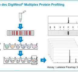 Übersicht des DigiWest-Analyseprinzips