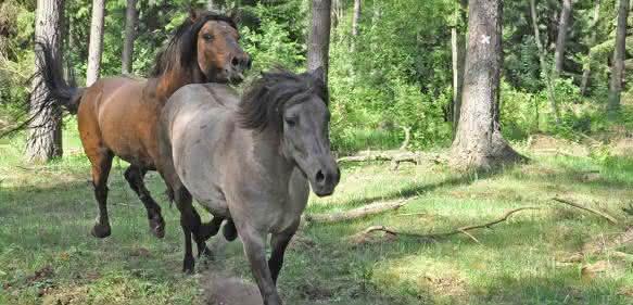 Fellfarben bei Pferden