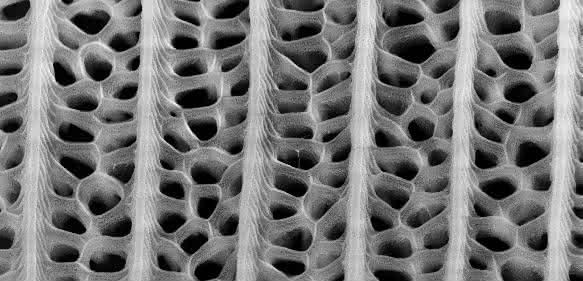 Nanostrukturen auf dem Flügel von Pachliopta aristolochiae lassen sich auf Solarzellen übertragen und steigern deren Absorptionsraten um bis zu 200 Prozent (Grafik: Radwanul H. Siddique, KIT/CalTech)