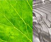 Ressourceneffizienz durch Bionik: VDI-Analyse verdeutlicht Innovationspotenzial