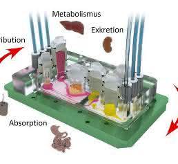 Vier-Organ-Chip