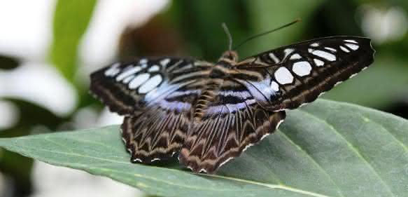 Dramatischer Rückgang in der Artenvielfalt - auch bei Schmetterlingen