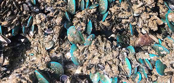 Muscheln heften sich an Schiffsrümpfe und beschädigen so das Material.