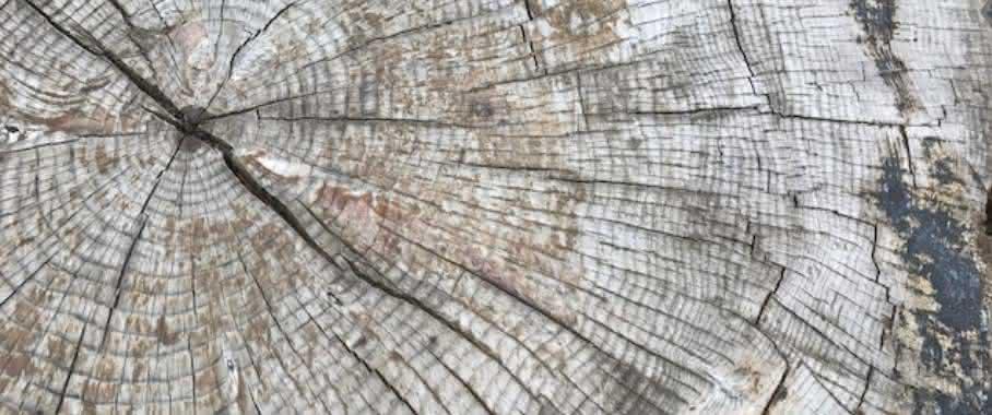 In Kombination mit den Jahresringen lässt sich ermitteln, in welchem Alter der Baum wieviel Kohlenstoff aufgenommen hat. (Bild: Weka Business Medien)