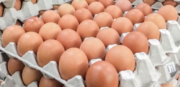 Fipronil in Eiern? (Bild: Fotolia / Nudda)