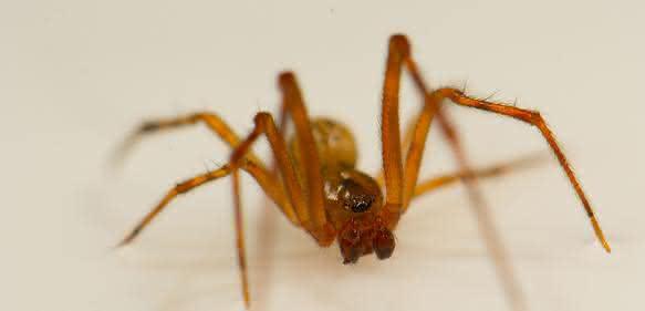 Spinne (Bild: Leonard Georg)