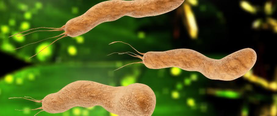 Kommunizieren diese Bakterien miteinander?