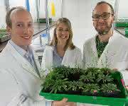 Pflanzenzüchtung: ATP in Keimlingen sichtbar gemacht