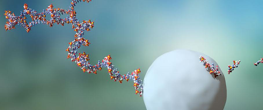 RNA-Moleküle leben durchschnittlich zwei Minuten, bevor sie von einem Exosom eliminiert werden.