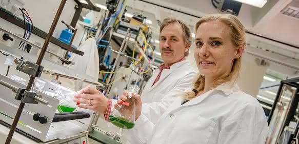 Wasserstoff und Metabolismus: Evolution eines bakteriellen Enzyms in Grünalgen