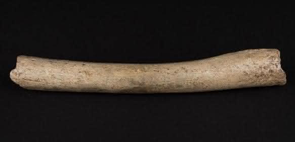 Neandertaler-Evolution: Urmenschen-Migration aus Afrika viel früher?