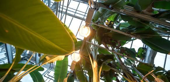 Moderne Gewächshäuser sollen helfen das Zusammenspiel von Mensch, Pflanze und Klima effizienter zu erforschen. Bild: Universität Hohenheim / Wolfram Scheible