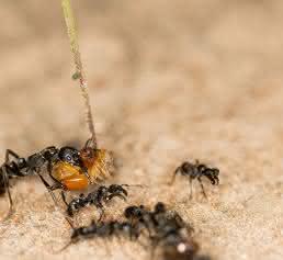 Termitensoldaten