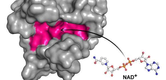 Molekül NAD⁺