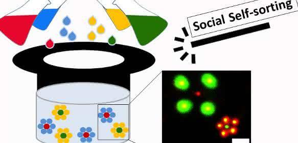 Wissenschaftler des DWIs und der Universität Freiburg stellten vier Arten von mikroskopisch kleinen Gel-Partikeln her, die sich selbstständig zu unterschiedlichen Strukturen anordnen können (Bild: Prof. Dr. Andreas Walther, Universität Freiburg).