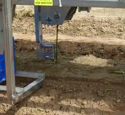 Ernteroboter für grünen Spargel