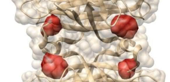 Protein Streptavidin