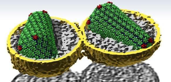 Einblicke in HIV in bislang unerreichter Auflösung: Die grün und rot dargestellten CA-Eiweiß-Strukturen formen die konische Schutzhülle des Virusgenoms. (Foto: Simone Mattei / EMBL)