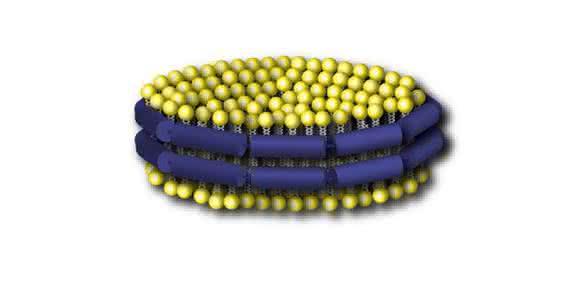 """Um Interaktionen isoliert und unter kontrollierten Bedingungen aufzuklären, benutzten die Forscher sogenannte """"Nanodiscs"""" als Modellsystem. Diese bestehen wie Zellmembranen aus einer Doppelschicht von Lipiden (gelb). Ein umlaufendes Gerüst-Protein (blau) hält sie zusammen.  (Copyright: Forschungszentrum Jülich)"""