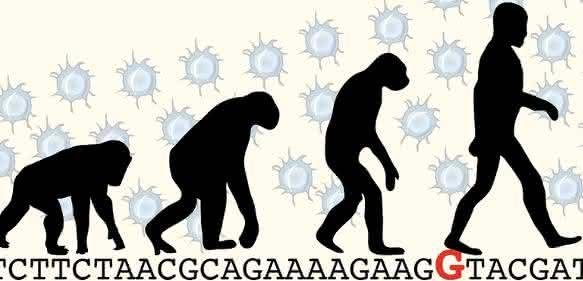 Der Austausch eines einzigen Buchstabens (rot) im Code des ARHGAP11B-Gens hat zur Folge, dass sich beim modernen Menschen mehr Stammzellen im Gehirn bilden als bei früheren Menschenformen. (© MPI f. molekulare Zellbiologie und Genetik)