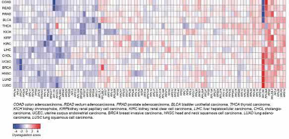 Niveau der Genexpression einzelner ribosomaler Proteine (RP) in unterschiedlichen Krebsarten (blau: niedrigerer; rot: höherer Level verglichen mit normalem Gewebe). (Bild: Universität Basel, Biozentrum)