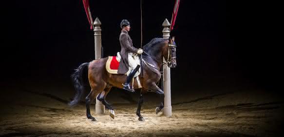 Spanische Hofreitschule Spot aufs Pferd
