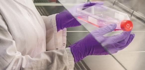 Eine Wissenschaftlerin des Fraunhofer IGB kultiviert Zellen, die eine funktionalisierte extrazelluläre Matrix – die clickECM – bilden. (© Foto Fraunhofer IGB)