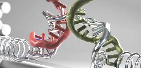 Nanoklammer aus DNA-Strängen. (Grafik: Christoph Hohmann)