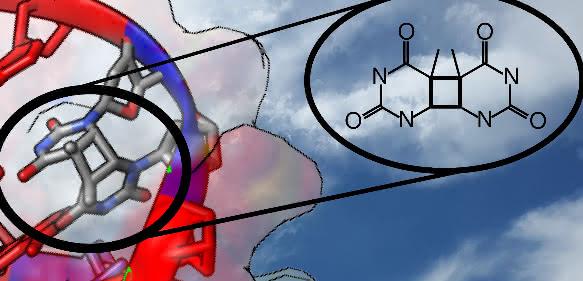 """Durch Einfluss von UV-Strahlung finden Nukleobasen, die Bausteine der DNA, manchmal den falschen Partner. Der Mechanismus dieses """"Seitensprungs"""" konnte jetzt geklärt werden. (Copyright: Clemens Rauer, Universität Wien)"""