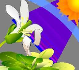 UV Strahlen des Sonnenlichts können Pflanzen schädigen, was u.a. zu einer Zerstörung von Blattzellen und Schäden in Blüten führen kann. (© Takayuki Tohge, MPI-MP)